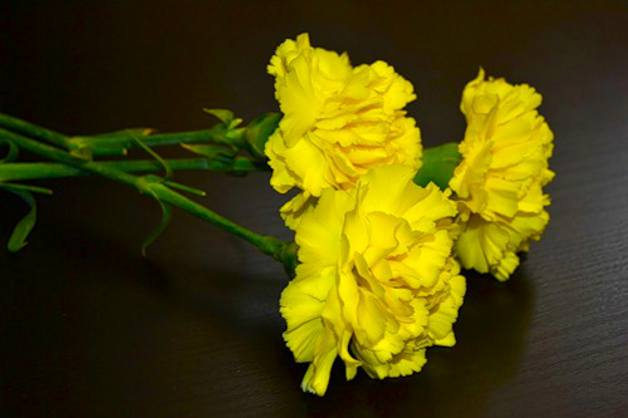 Жълт карамфил