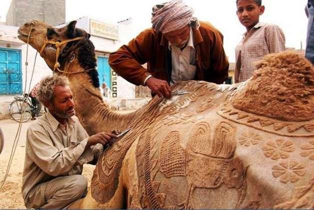 camel-11