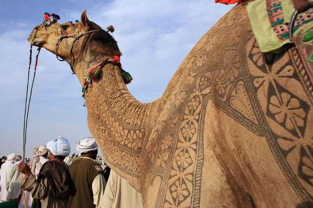 camel-17