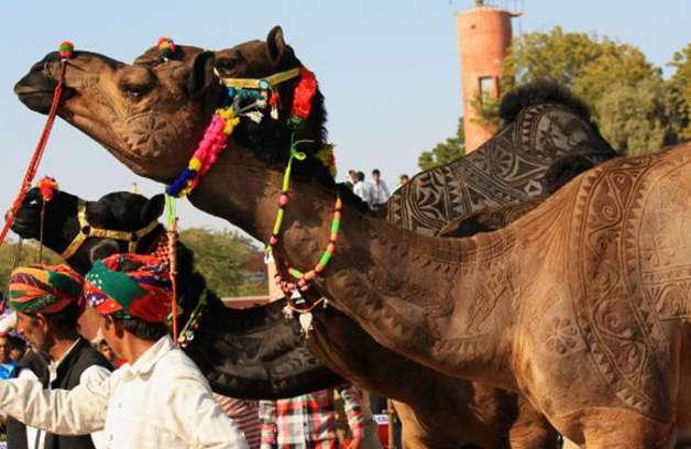 camel-5
