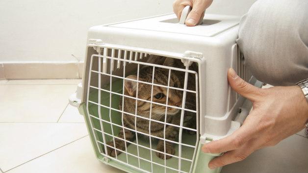 След като стигне в клиниката клетката ще е дома на котката и тя няма да иска да се отдели от нея.