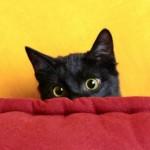 Уплашено коте