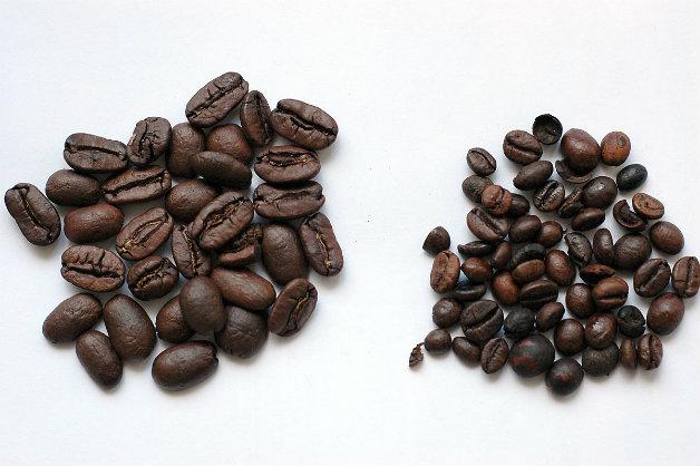Кафето с най-едри зърна