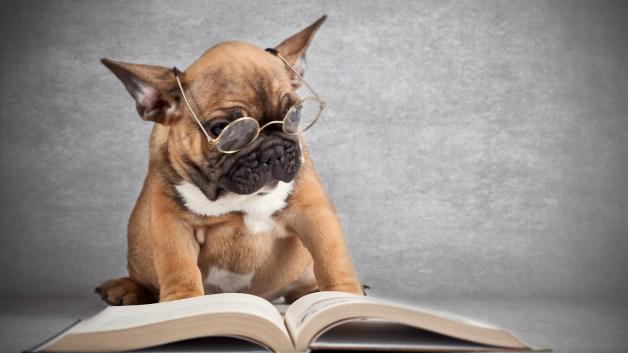 Кучетата не разбират като им говорите на чужд език