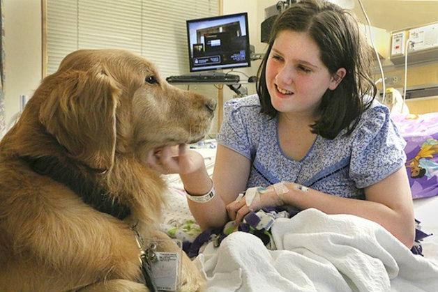 Кучетата са лечители