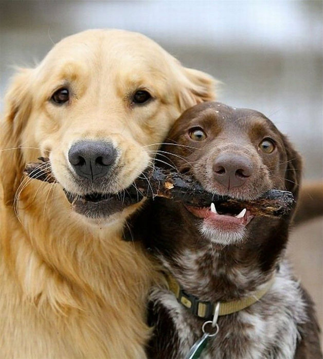 Кучето е най-добрия приятел на човека