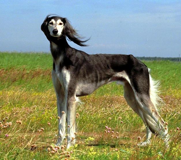 Най-боготвореното куче