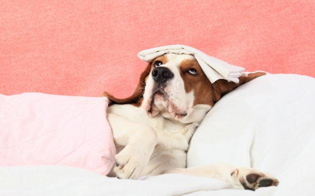 Кучетата са по-топлокръвни от нас